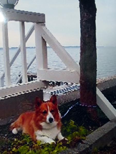 【岡山通信】老夫婦と犬一匹 移住の記<3>