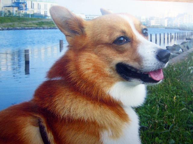 【岡山通信】老夫婦と犬一匹 移住の記<4>