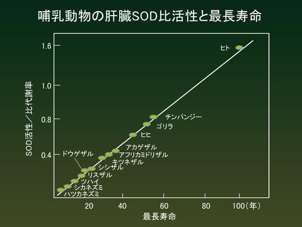 肝臓SOD比活性と最長寿命