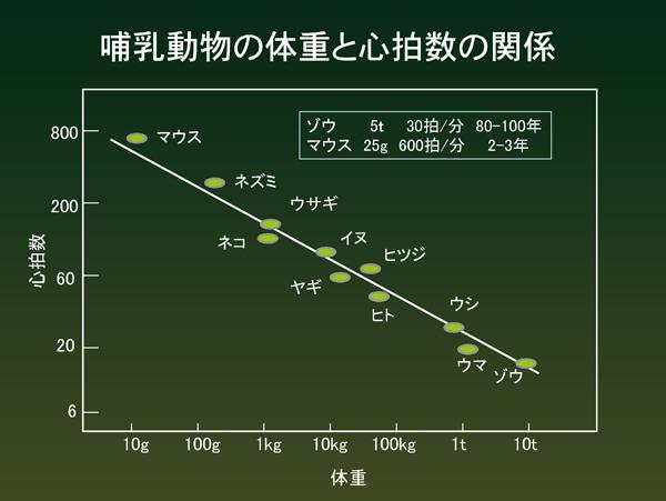 哺乳動物の体重と心拍数の関係