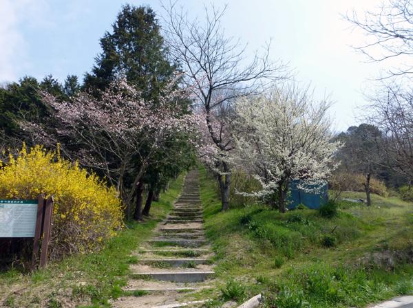 【岡山通信】岡山の桜(前篇)