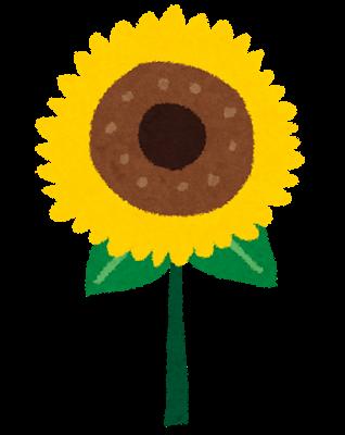 ガン治療と向日葵